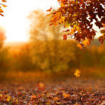 beautiful autumn landscape, falling oak leaves